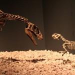 ラプトレックス(写真左)とプシッタコサウルス(同右)