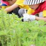 本格的な庭に入る機会がさほどない子供たちにとっては新鮮な体験