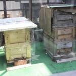 快晴に恵まれ、元気よく飛び回る蜂たちを間近にみることができた