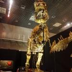 真下から見上げる恐竜の全身骨格は圧巻。自分が狙われた獲物のような気分に