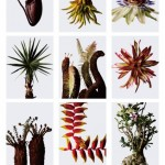 展示されているどの植物も摩訶不思議な驚くものばかり